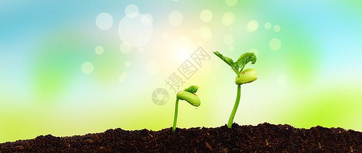 发芽的植物图片图片