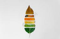 落叶唯美创意图片图片