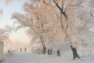 雪中的桥图片