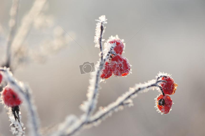 冬天里的挂冰霜植物图片