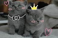 小猫的爱情图片