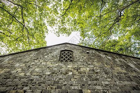 绿树房顶图片