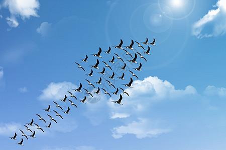 飞鸟形成箭头好兆头图片