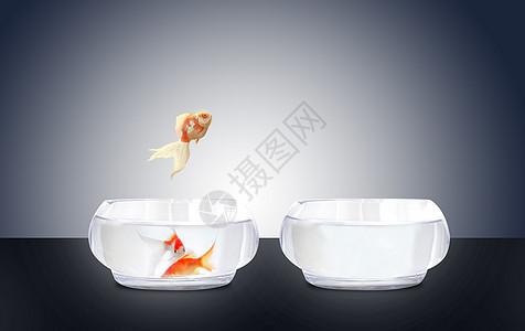 从鱼缸跳跃出来金鱼素材背景图片