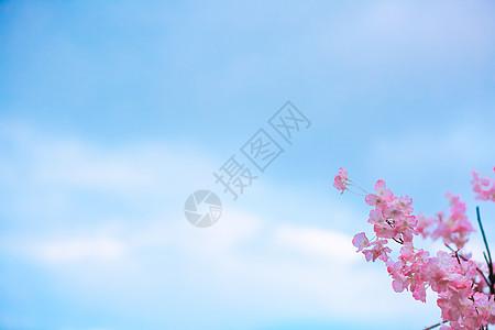 蓝天下的桃花简洁背景大图图片