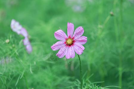 雨季有露水的花图片