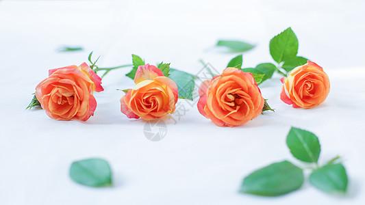 浓情玫瑰爱情浪漫七夕节图片