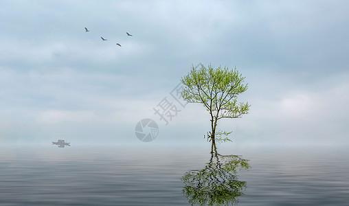 树、船与飞鸟图片