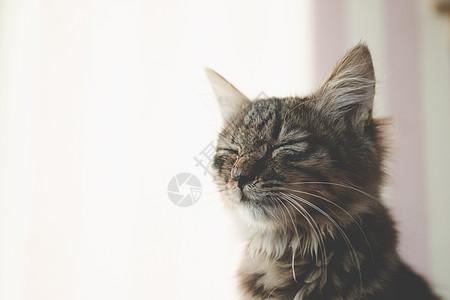 猫咪睡觉图片