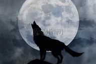 月夜狼叫图片