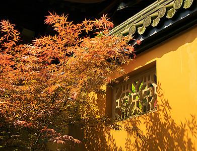 杭州灵隐寺外的枫叶图片