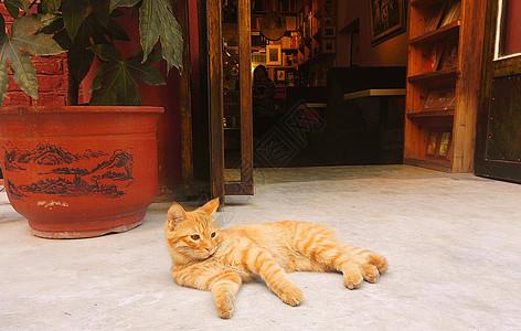 午后的猫图片