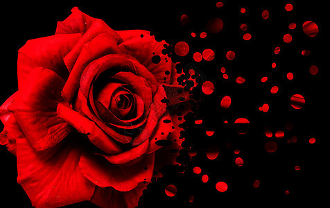消逝的玫瑰图片