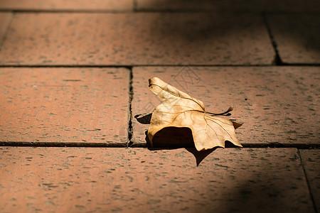 夕阳里地上枯黄的落叶图片