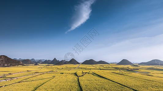 云南罗平县油菜花海图片