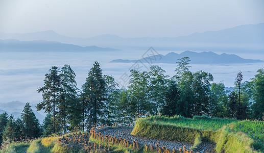 湖南紫鹊界梯田云海自然风光美景图片