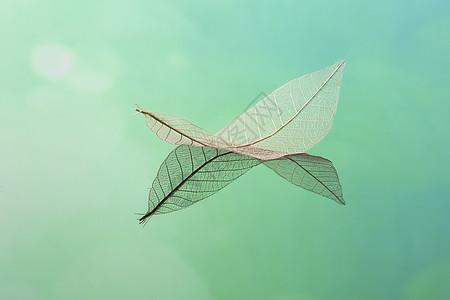 唯美树叶背景素材图片