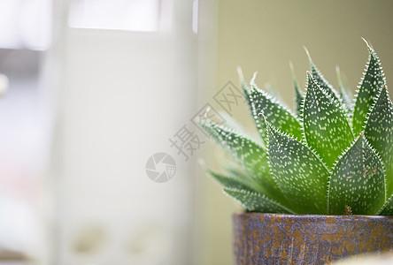 绿色多肉植物图片