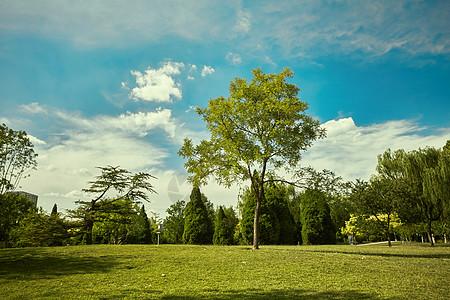 公园草坪上的一棵树图片