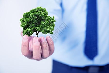 手里的树图片