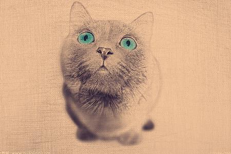 绘画素描猫高清图片