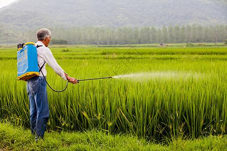 稻田种植人工喷洒农药的农民图片