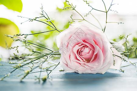 浪漫玫瑰花图片