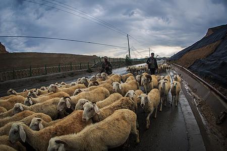 甘肃雨天的牧羊人图片
