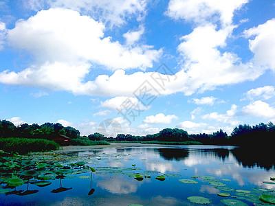 虎丘湿地公园图片