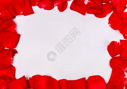 七夕情人节玫瑰花瓣图片