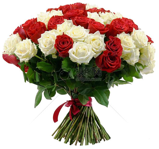 玫瑰花白底素材图
