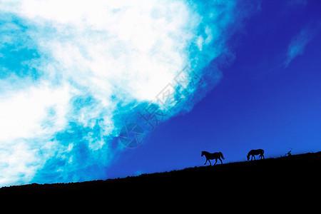 蓝天白云下草地上的马图片
