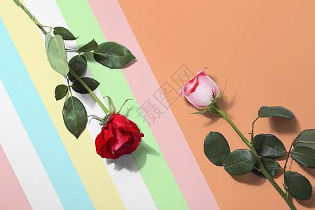 色彩缤纷玫瑰花图片