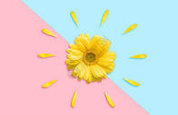 小清新雏菊图片