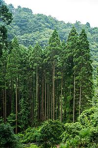 山里的树林图片