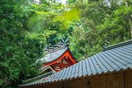 树林里的日本神社图片