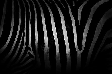 斑马的纹理图片