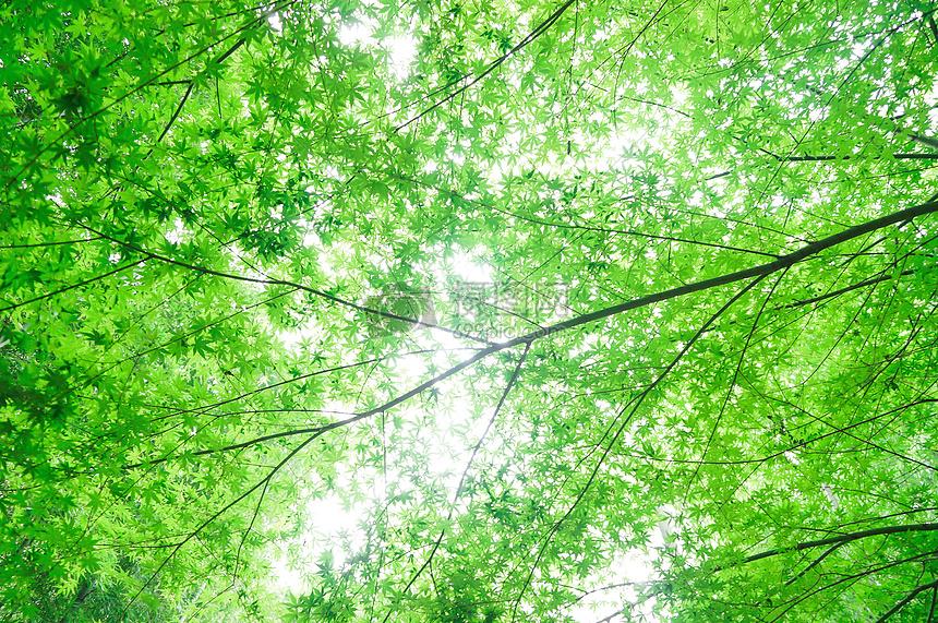 养眼的绿色屏保