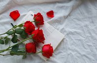 红色玫瑰花情人节素材图片