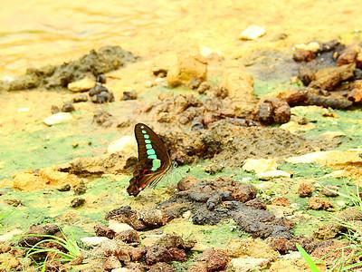 蝴蝶摄影图片