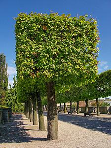 像方块一样的树图片