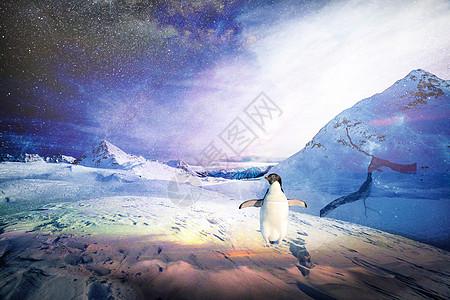 繁星下的企鹅图片