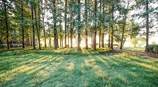 森林树木日出图片