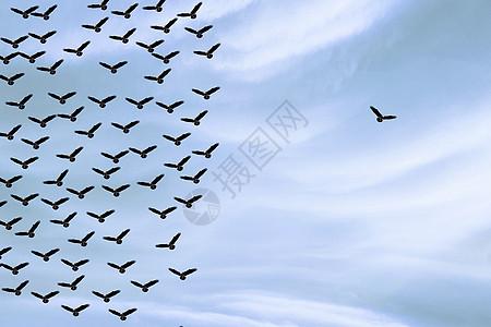 独自飞翔的一只鸟图片