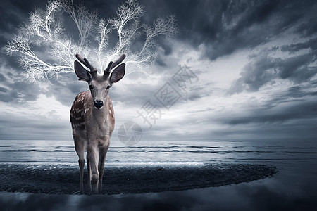 背上有房子的鹿图片