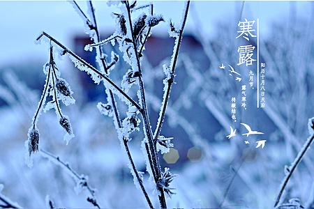 寒露节气图片