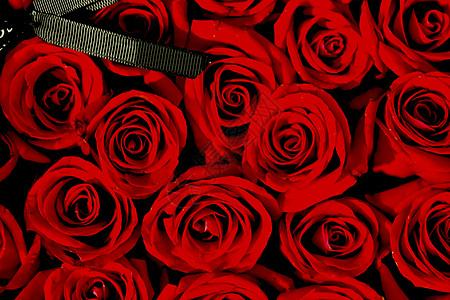 爱情红玫瑰图片