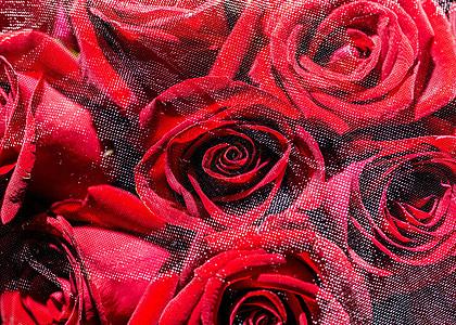 蒙纱玫瑰花图片