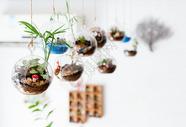 小清新的植物吊瓶图片