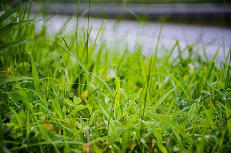 雨后小草_小草背景_小草摄影图片_小草壁纸_摄图网